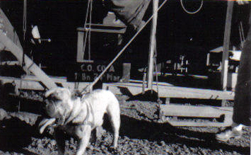"""""""Tojo"""" originally belonged to a Japanese soldier on Roi-Namur. After the battle, one of the company's animal lovers (or souvenir hunters) rescued him and smuggled him back to Camp Maui."""