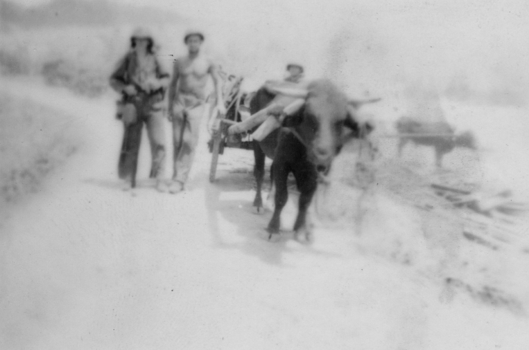 """Our 81mm mortar platoon also used the day advantageously to augment their string of labor-saving oxen, complete with carts. Saipan boasted large numbers of these powerful heavy brutes, and by nightfall the platoon ""owned"" a train of half a dozen two-wheeled carts with the necessary oxen."" - 1Lt. Fred A. Stott"