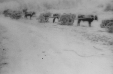 """The sight of a platoon advancing with this primitive baggage train was reminiscent of many an old-time battle painting--minus the camp followers. Improvise whips and cattle calls soon appeared...."" - Lt. Stott"